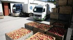 Analiza sadyogrody.pl: Ceny jabłek przemysłowych wzrosły wraz z końcem zbiorów