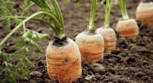 Problem nicieni na warzywach