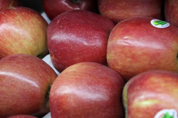 Polskie jabłka chcą podbić Portugalię