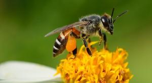 Producenci środków ochrony roślin chcą chronić owady zapylające