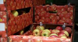 Kraje UE mają rekordowe zapasy jabłek