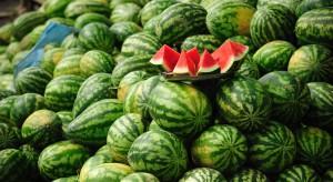 Kawon czyli arbuz. Perspektywy uprawy w Polsce