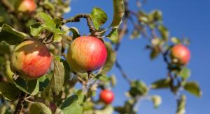 Syngenta rozszerza program Fruit Quality Contract w Polsce