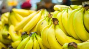 """""""Śmiertelna"""" choroba bananów zagrożeniem dla rynku"""