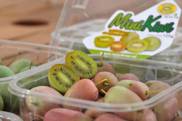 Aktinidia może stać się nowym hitem wśród polskich owoców jagodowych