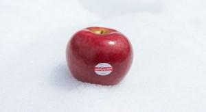 """""""Karmazynowy śnieg"""" - nowa odmiana jabłek z długim okresem trwałości (zdjęcia)"""