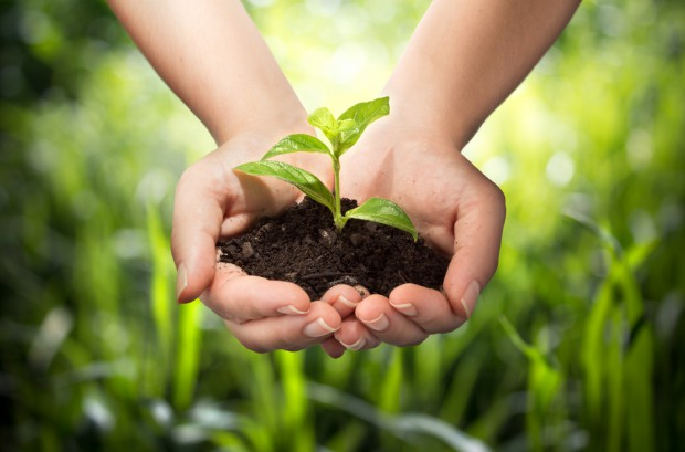 Integrowana Produkcja i uprawy ekologiczne w PROW 2014-2020