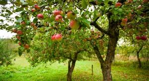 Technologia z pomocą w prognozowaniu rozwoju parcha jabłoni