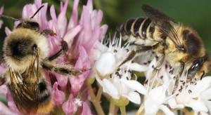 Syngenta tworzy siedliska dla pszczół