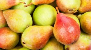 Kazachstan zwiększył import holenderskich gruszek