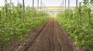 Konieczne są zmiany w produkcji drzewek jabłoni