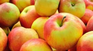 Zapasy jabłek w Polsce o 6,5 proc. wyższe niż rok temu