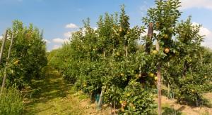 Mołdawia dostanie środki z UE na rozwój sadownictwa