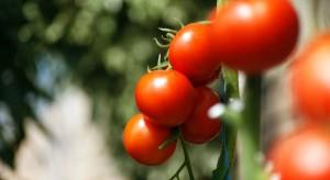 Citronex: Niestabilne kursy walut uderzają w branżę owoców i warzyw