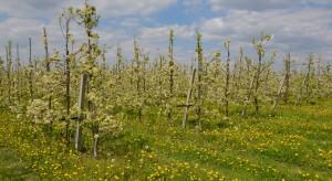 Dobra ocena przezimowania plantacji owoców. Nie odnotowano większych strat