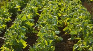Czas siewu fasoli szparagowej - jak uprawiać to warzywo w gruncie?