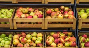 Zapasy jabłek w Polsce niższe niż rok temu. Analiza BGŻ BNP PARIBAS