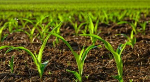 Nowe przepisy dotyczące produkcji ekologicznej do ustalenia z Parlamentem Europejskim