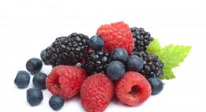 Polska znaczącym producentem owoców jagodowych w UE