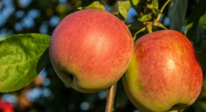 Racjonalne nawożenie gwarancją utrzymania odpowiedniej jakości owoców
