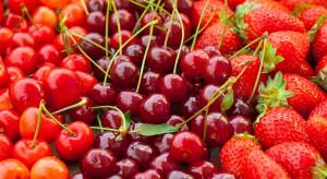 Na rynkach hurtowych królują owoce miękkie. W sprzedaży pierwsze wiśnie