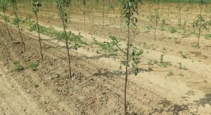 """Choroba replantacji - ograniczyć objawy """"zmęczenia gleby"""" w sadzie"""