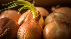 Rosja zwiększyła import cebuli - mimo embarga