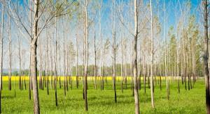 Do 17 sierpnia można składać wnioski na zalesianie