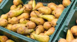 Większe zbiory gruszek na Ukrainie