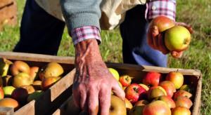 GUS: Zapowiadają się kolejne rekordowe zbiory owoców