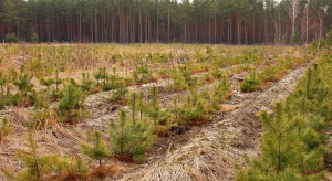 ARiMR: Do 17 sierpnia można składać wnioski o zalesianie
