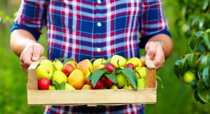 Zbiory owoców na Ukrainie będą zbliżone do zeszłorocznych
