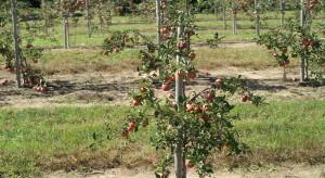 Jak poprawić kondycję drzew w sadach podczas upałów?