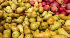 Zbiory jabłek i gruszek w UE  będą mniejsze od ubiegłorocznych