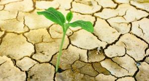 PSL, w związku z suszą, chce uruchomienia rezerwy kryzysowej