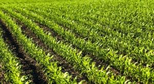 Biostymulatory szansą dla rozwoju zrównoważonych metod produkcji rolniczej