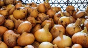 Złodzieje warzyw z gm. Międzyrzec Podlaski zostali schwytani