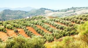 Groźna bakteria Xylella zagraża uprawom na Korsyce
