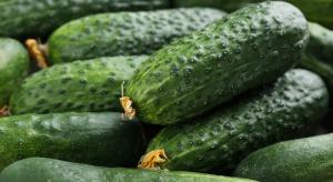 Francuzi produkują coraz więcej ogórków