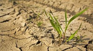 Straty w wyniku suszy sięgają już 1,6 mld zł