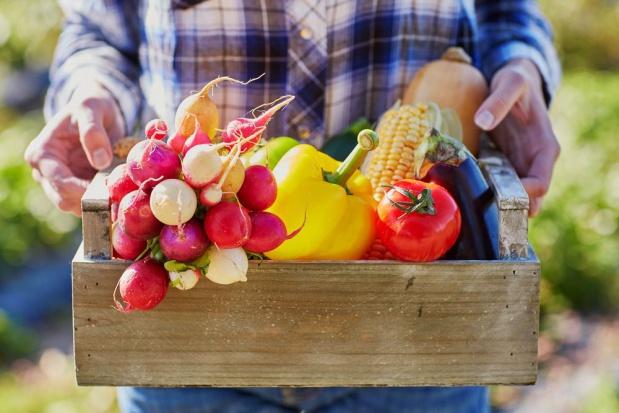 Ekologiczna produkcja owoców – wsparcie z PROW 2014-2020