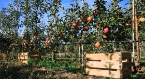Dokarmianie drzew owocowych w sadzie po zbiorach owoców