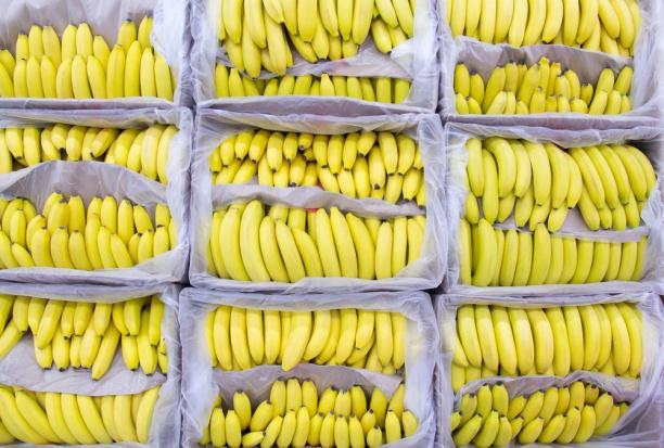 300 kg kokainy w kontenerze z puree bananowym z Kostaryki