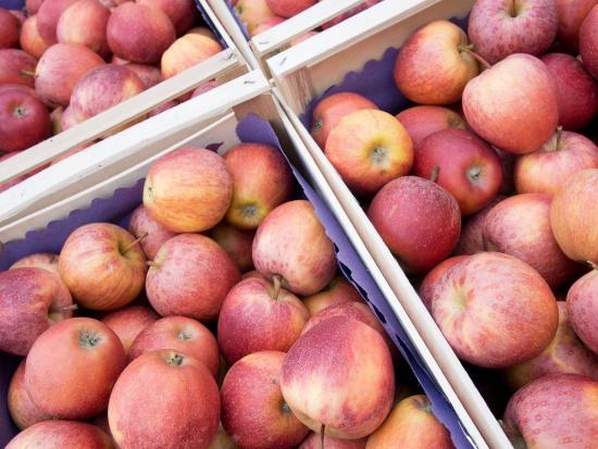 Ponad połowa niemieckich jabłek z pozostałościami pestycydów?