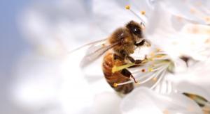 Greenpeace: Polacy adoptowali ponad 100 tysięcy pszczół