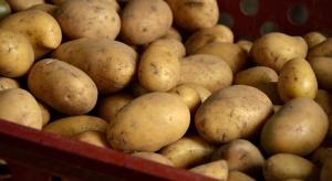 Holandia: Zbiory ziemniaków będą wyższe niż prognozowano
