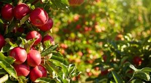 Jabłka Idared tracą na popularności na Ukrainie