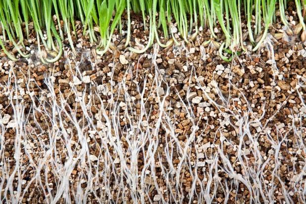 Wermikulit - złoty suplement gleby