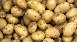 Zbiory ziemniaków niższe niż przed rokiem. Nawet o 1 mln ton