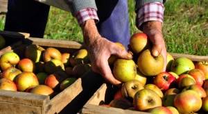 Ukraiński gigant ogrodniczy zwiększa zbiory jabłek